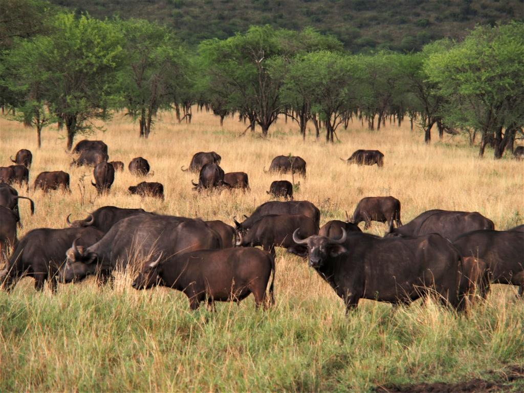 Die Serengeti ist eine der artenvielfältigsten Savannen.