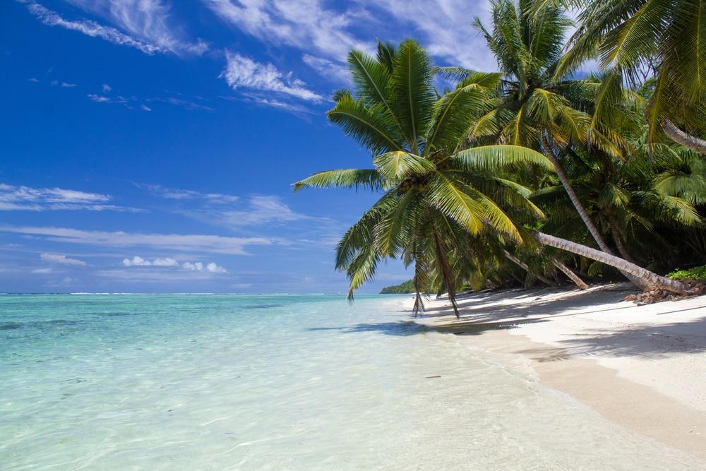 Große Palme über karibischem Strand