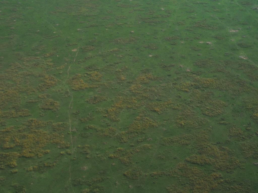Von oben erkennt man die abertausenden Tierspuren, die die Serengeti durchkreuzen.