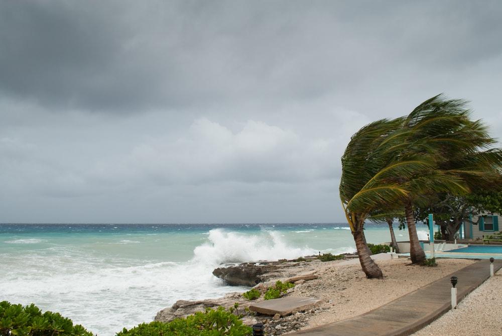 Hurrikan-Saison der Karibik: Palme am Meer