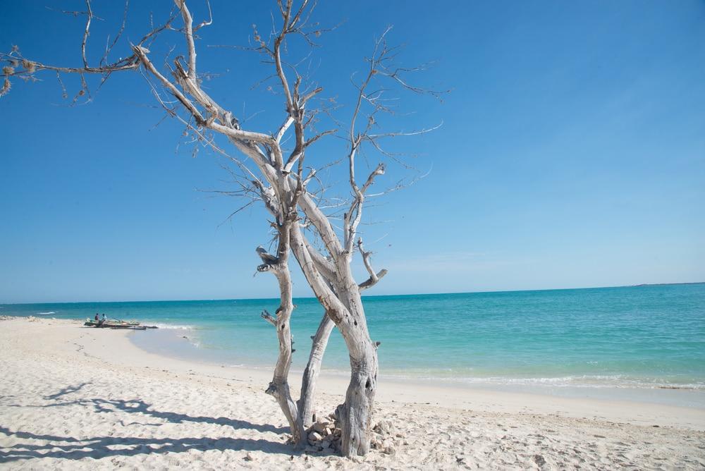 Weißer Strand mit türkisem Wasser und kahlem, weißen Baum.