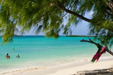 Pinienbaum vor karibischem Strand mit türkisen Wasser und badender Person.