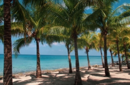 Strand mit Palmen in Yukatan