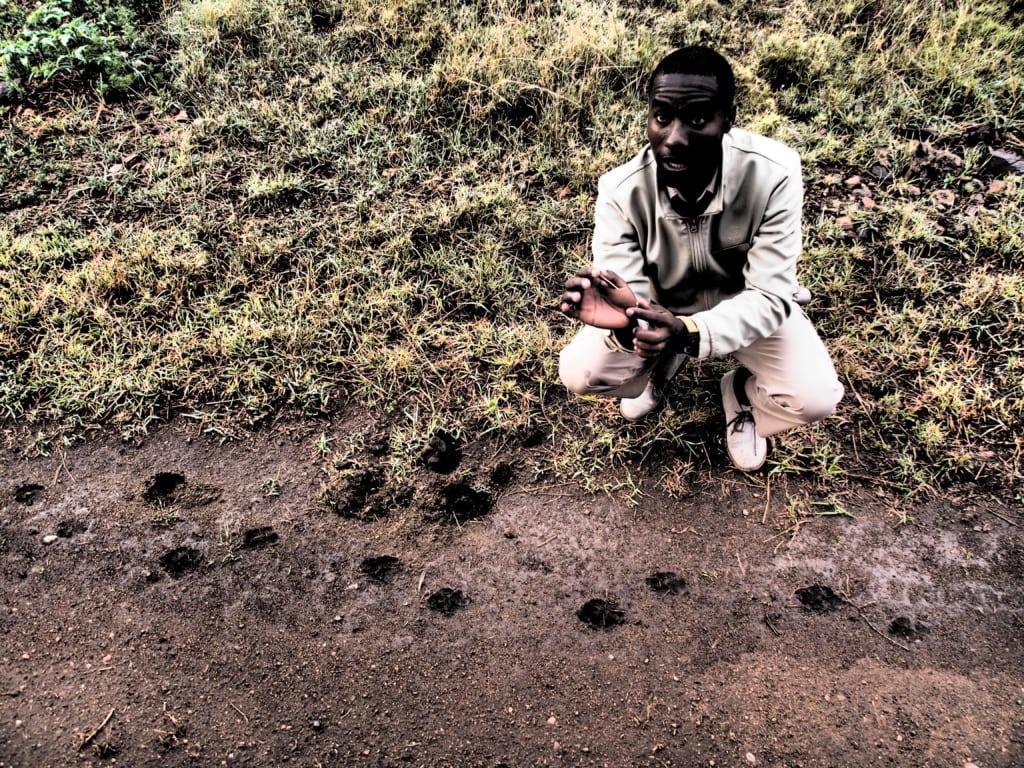 Peter vom One Nature Nyaruswiga erklärt genau, was für Tierspuren er in der Serengeti entdeckt.