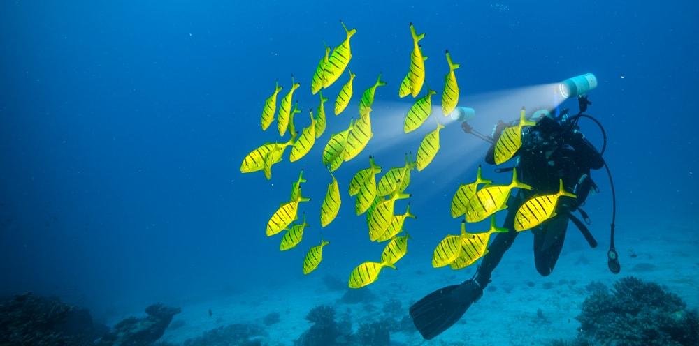 Taucher in den Seychellen