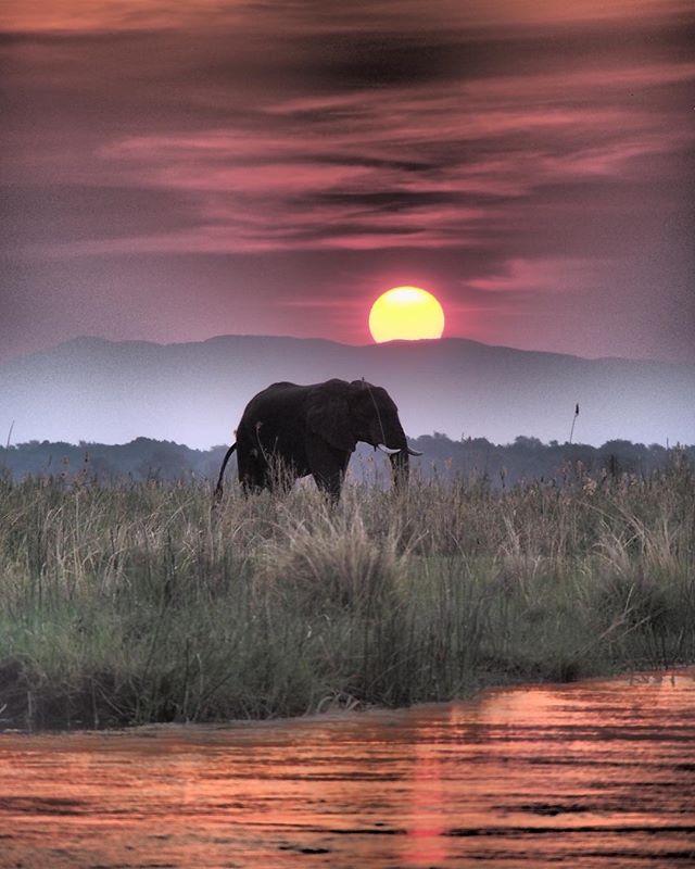 """""""Ein ganz besonderer Ort"""" – sagt Redakteurin Marie über den Mana Pools Nationalpark in Simbabwe. Oh, wir glauben ihr sofort! Ganz frisch hat dort das Chikwenya Camp von @wearewilderness am Ufer des Sambesi eröffnet!#welivetoexplore #traveldeeper #zimabwe #intothewild #passionpassport #reportervorort #africamagic"""