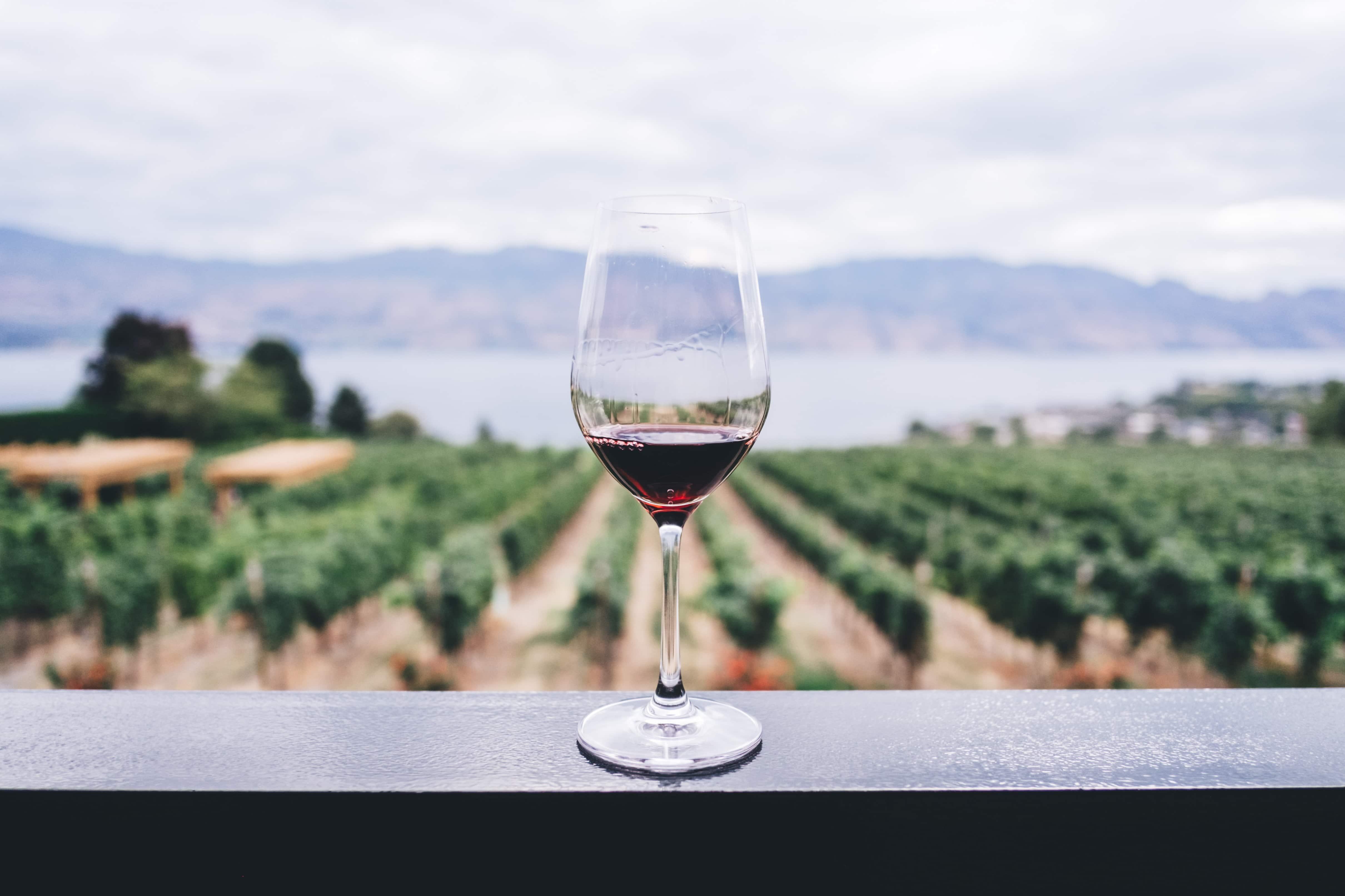 Weinglas mit Rotwein vor Reben und Wasser