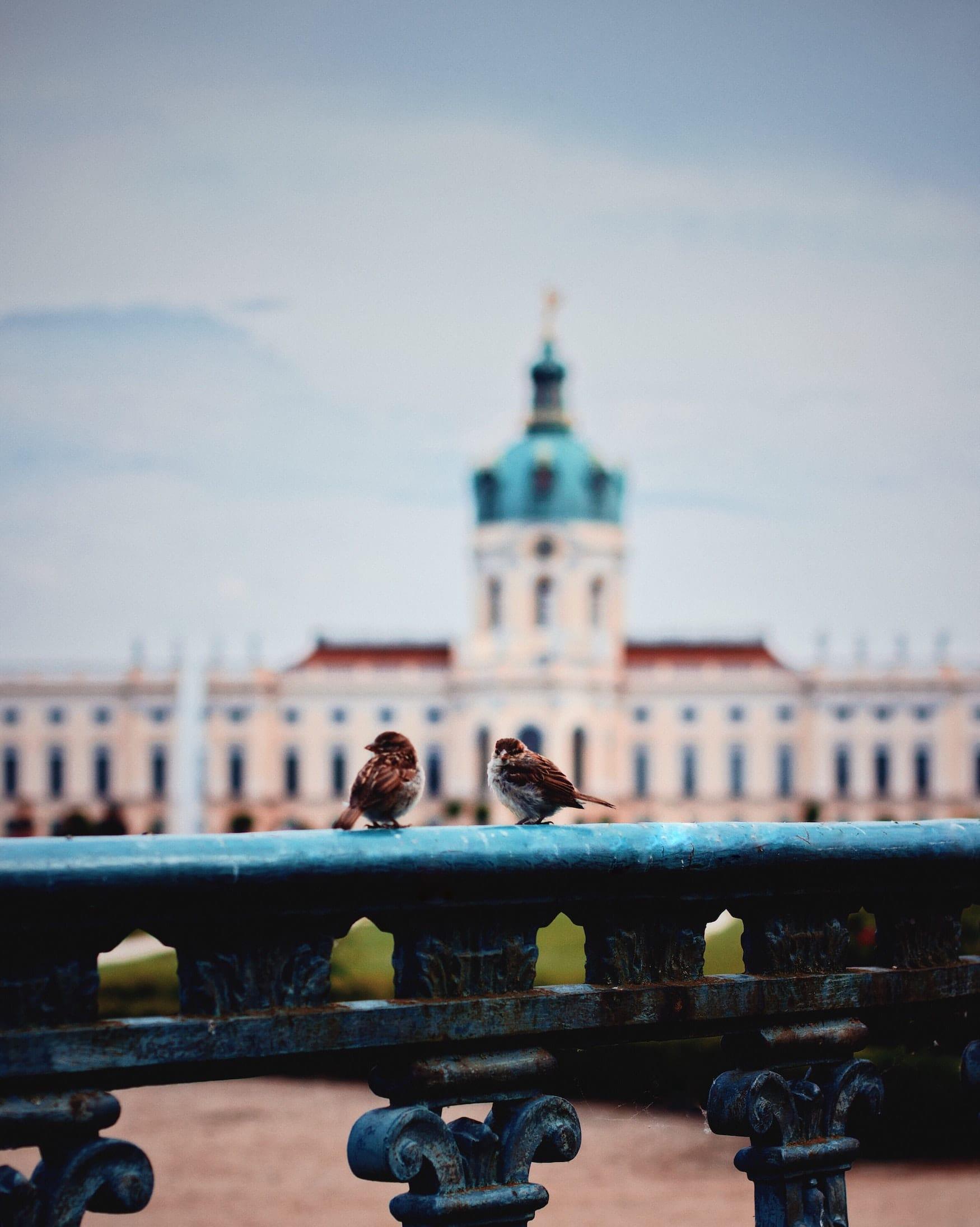 Zwei Vögel vor Schloss im Schlosspark Charlottenburg in Berlin