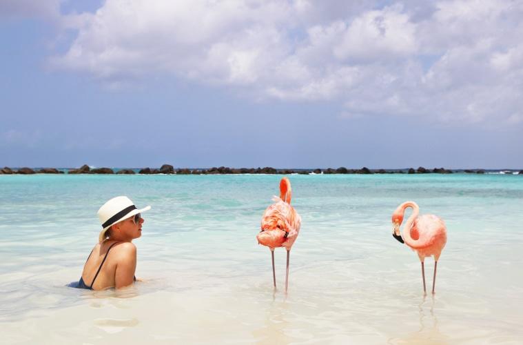 Flamingo Beach auf Aruba