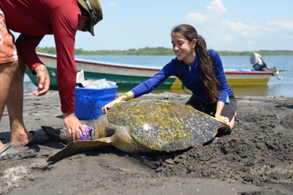Tierschutzmitarbeiterin Melissa bei der Pflege einer Meeresschildkröte am Strand