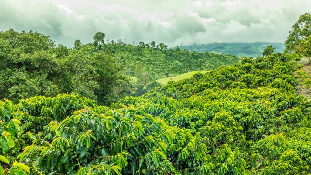 In den Bergen von Kolumbien wird weltbekannter Kaffee angebaut.