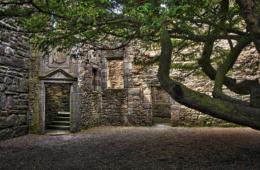 Alte Burgmauern mit Großem Baum im Vordergrund