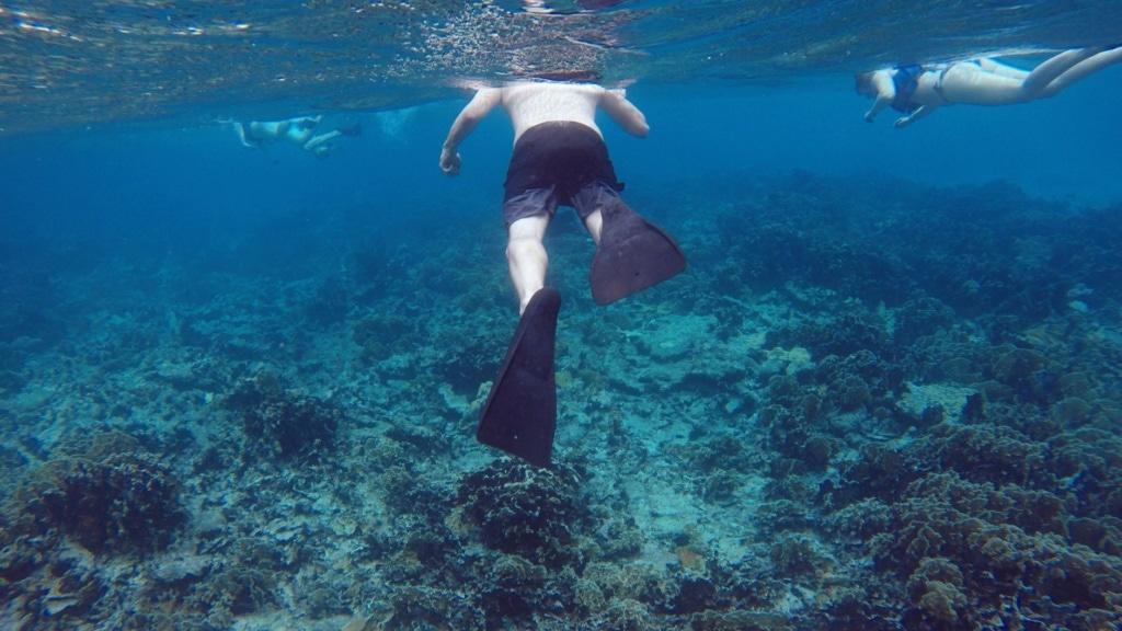 Touristen beim Schnorcheln auf Aruba