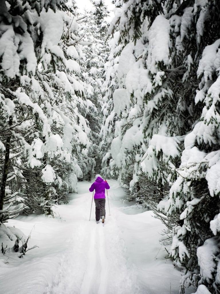 Skilangläufer im Wald