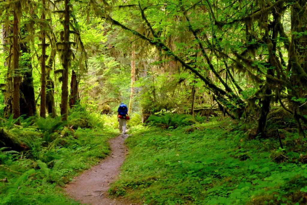 Hoh Rainforest in Washington