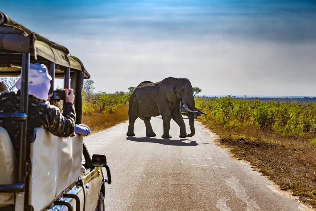 Safari-Jeep in Südafrika, Elefant auf Straße