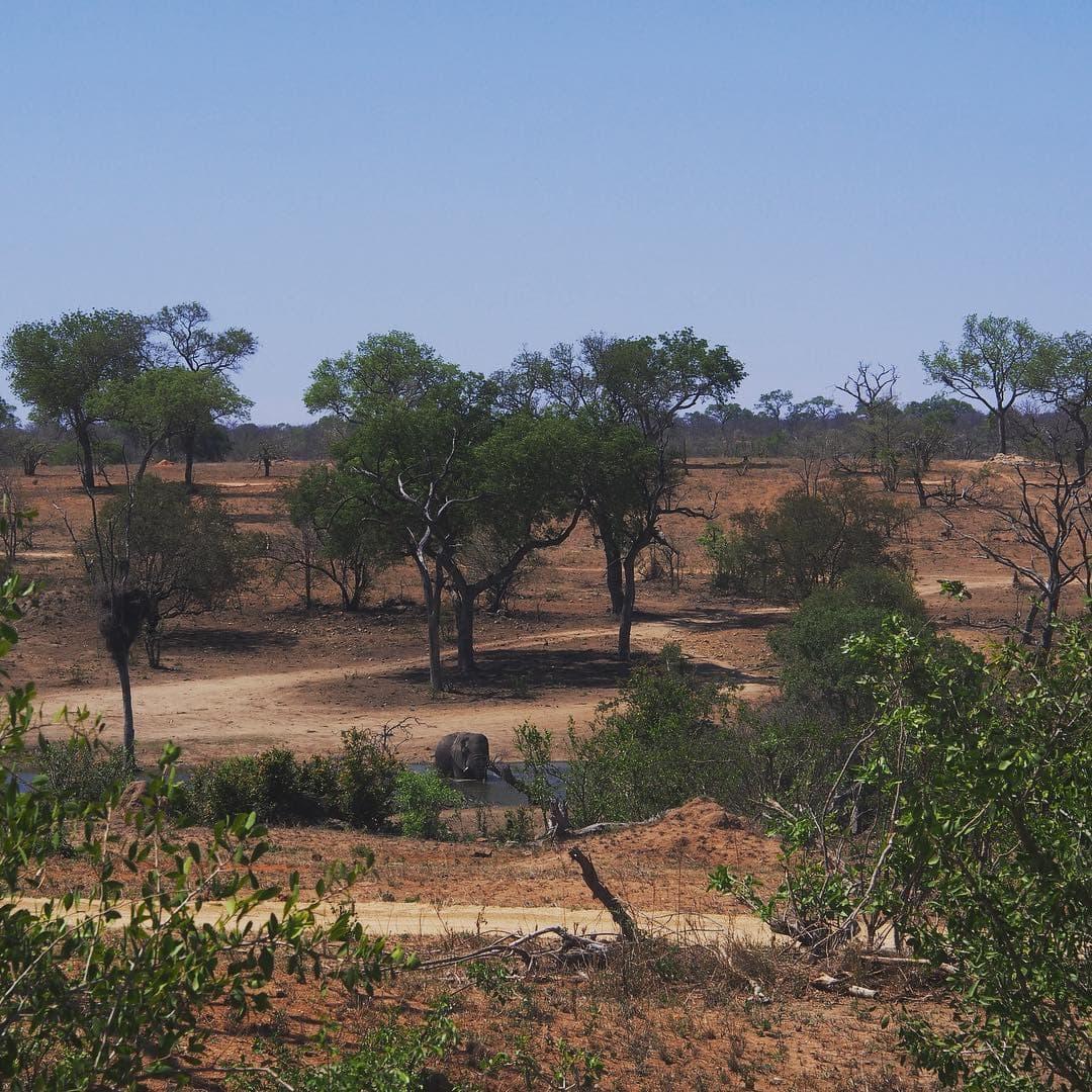 Hoher Besuch in der Earth Lodge im @sabisabireserve 🐘 von der Lodge hat man eine tolle Sicht auf die Wasserstelle, an der vor allem Elefanten und Nilpferde nach Abkühlung suchen. #sabisabi #southafrica #africa #safari #passionpassport #mytinyatlas #reportervorort #travelgram #nature