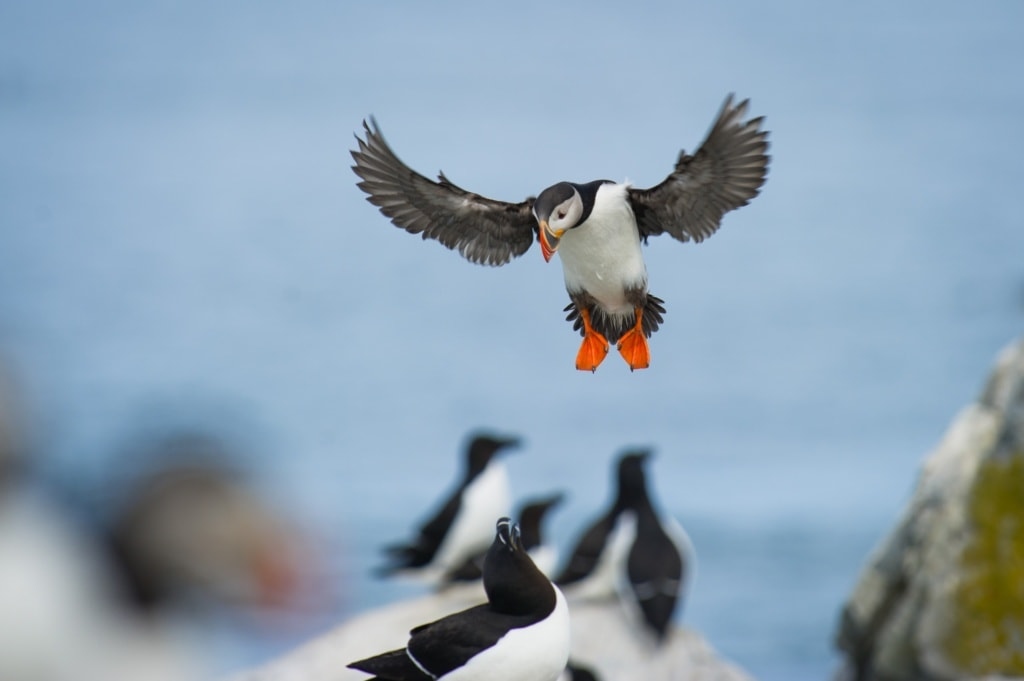 Seevögel in Maine