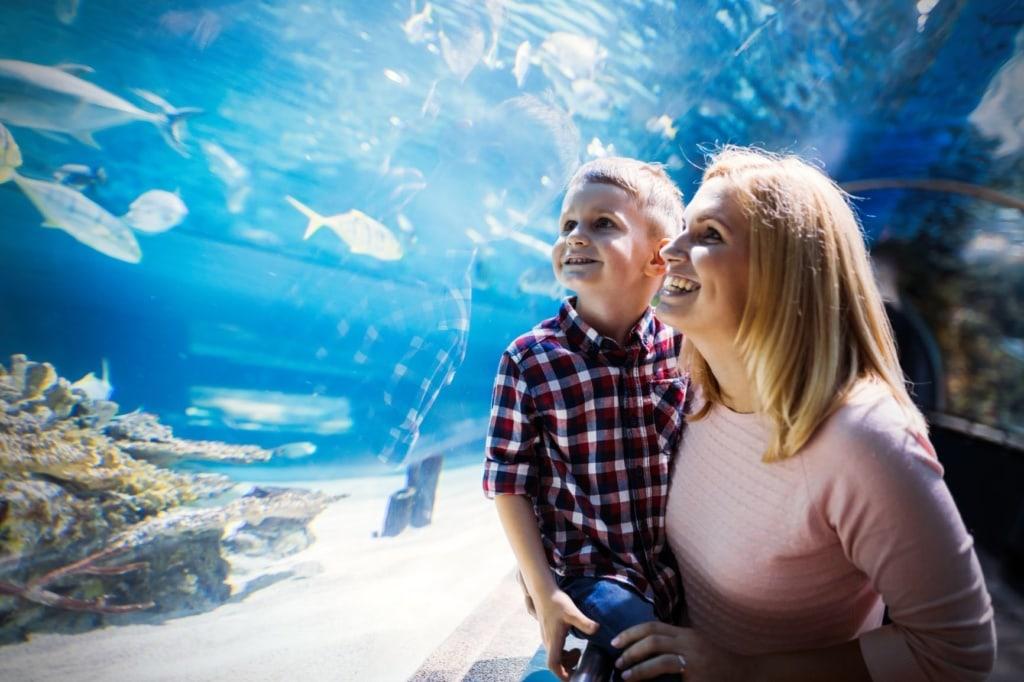 Mutter und Kind beim Bestaunen der Fische in Sealife