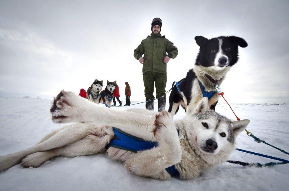 Huskies fühlen sich bei kalten Temperaturen unter null Grad Hundewohl.