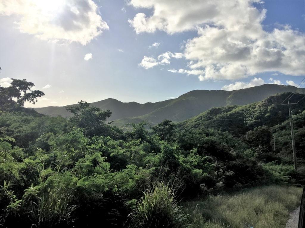 Regenwald in Antigua