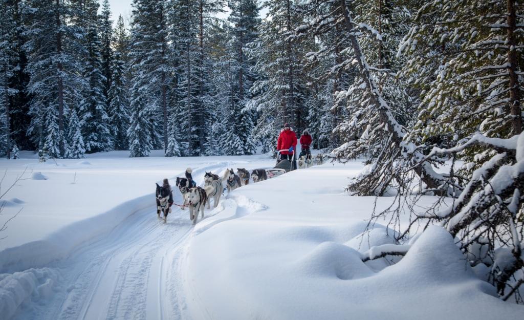 Querfeldein laufen die Huskys samt Schlitten durch Russland, unsere Autorin war mit dabei.