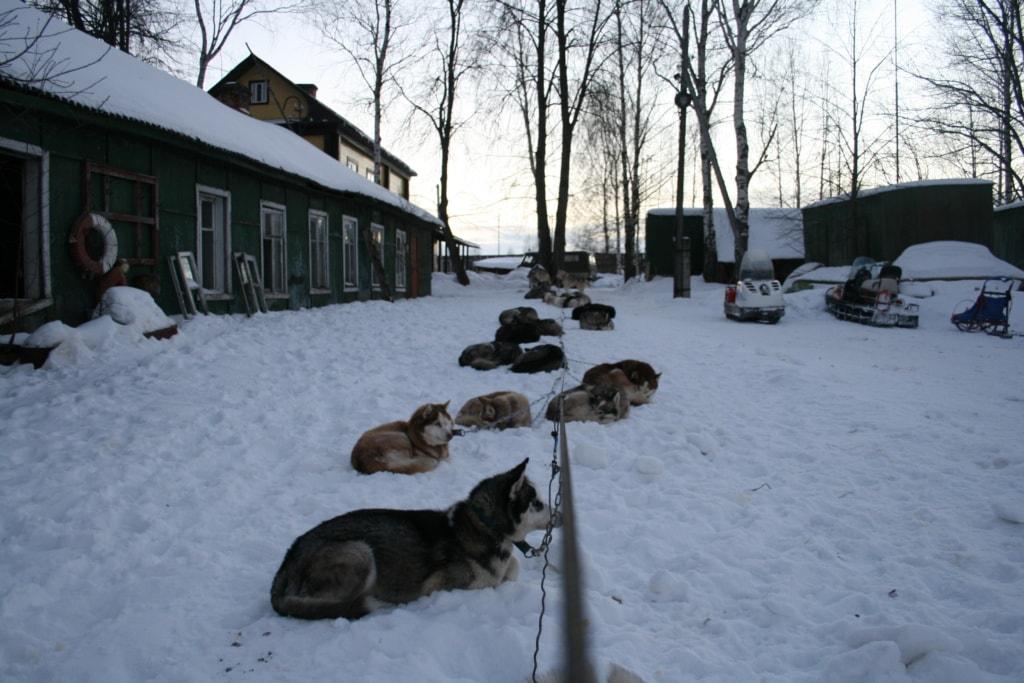 Des Nachts werden die Hunde bei unserer Husky-Tour draußen angebunden.