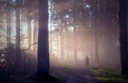 Mountainbikefahrer im Wald