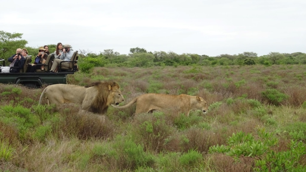 Phinda Game Drive