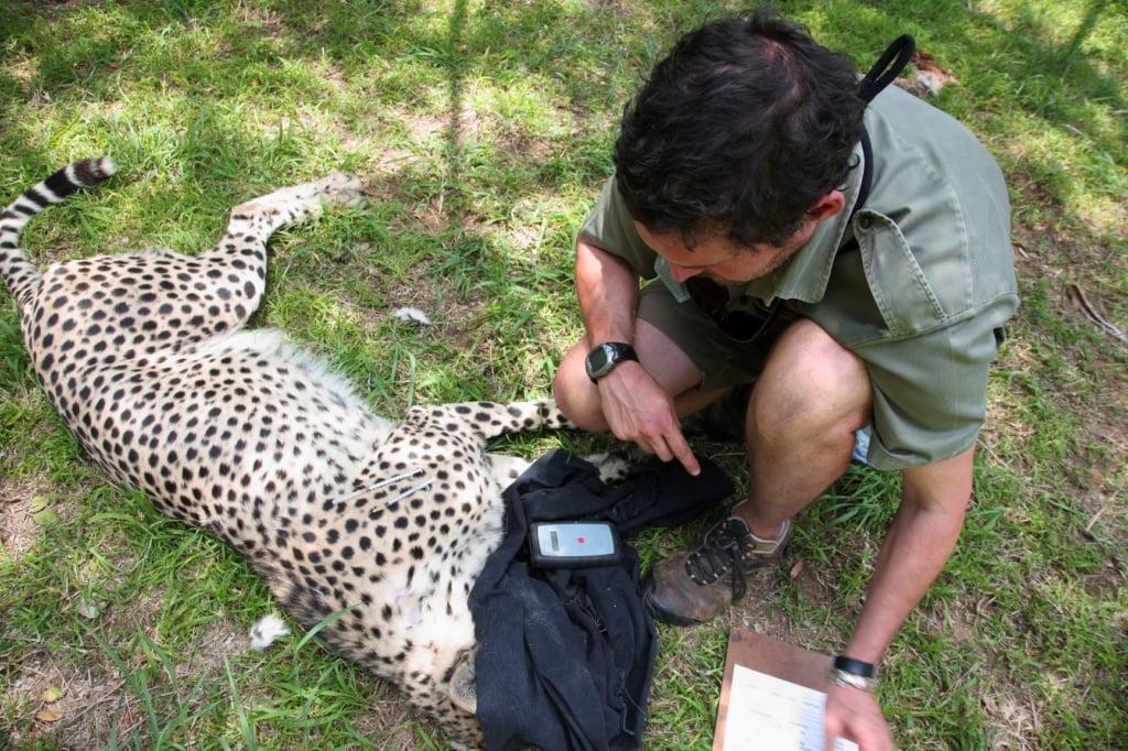 Artenschutz-Helfer im Einsatz in Südafrika