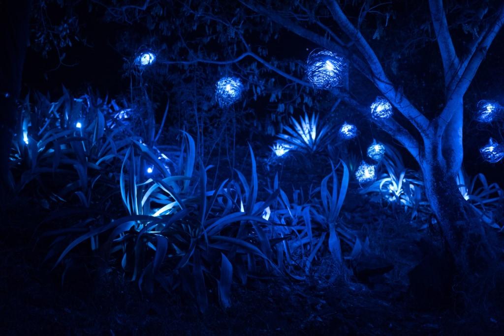 Nachts blüht es blau – beim Porlwi Festival auf Mauritius.