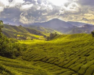 Cameron Highlands in Malaysia