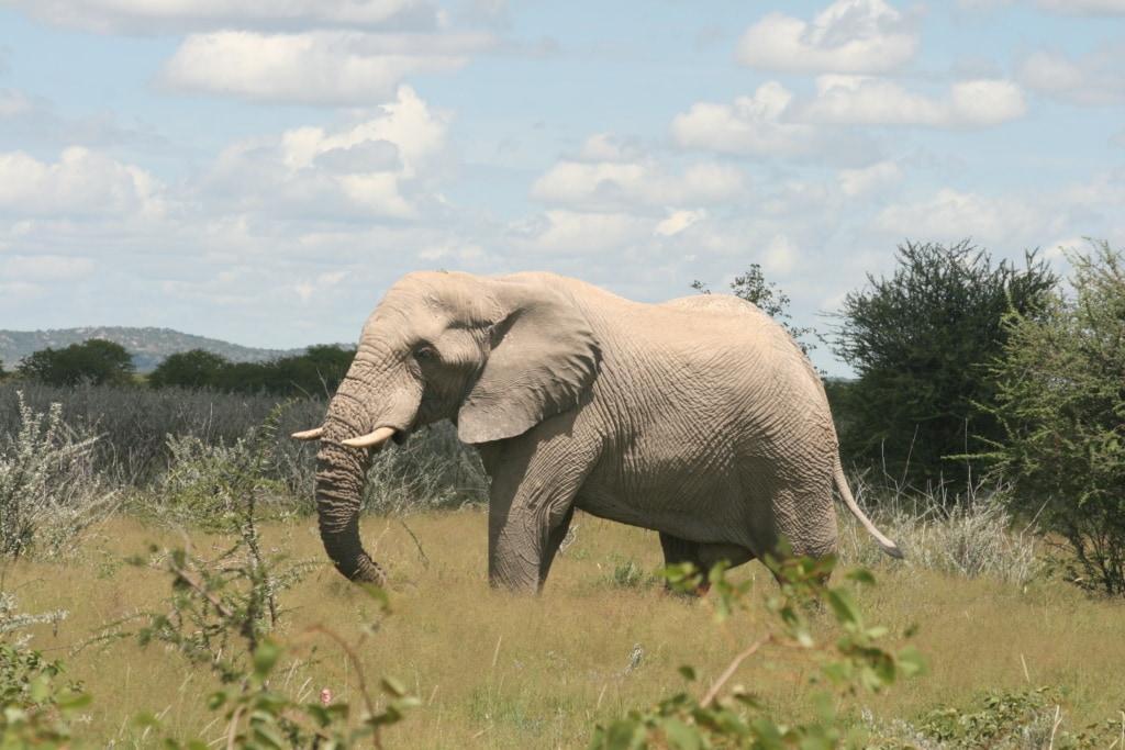 Im Damaraland traf Marie leider keine Wüstenelefanten an, dafür wurde sie aber hier im Erindii Schutzgebiet fündig.