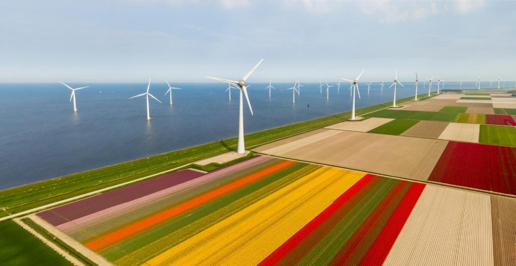 In Flevoland reichen die Tulpenfelder bis ans Meer.