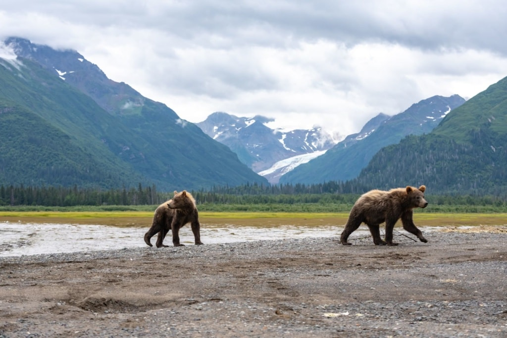 Zwei Grizzlybären im Lake-Clark-Nationalpark in Alaska