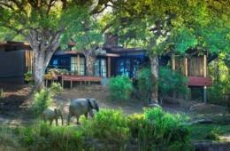 Elefanten vor der andBeyond Tengile River Lodge