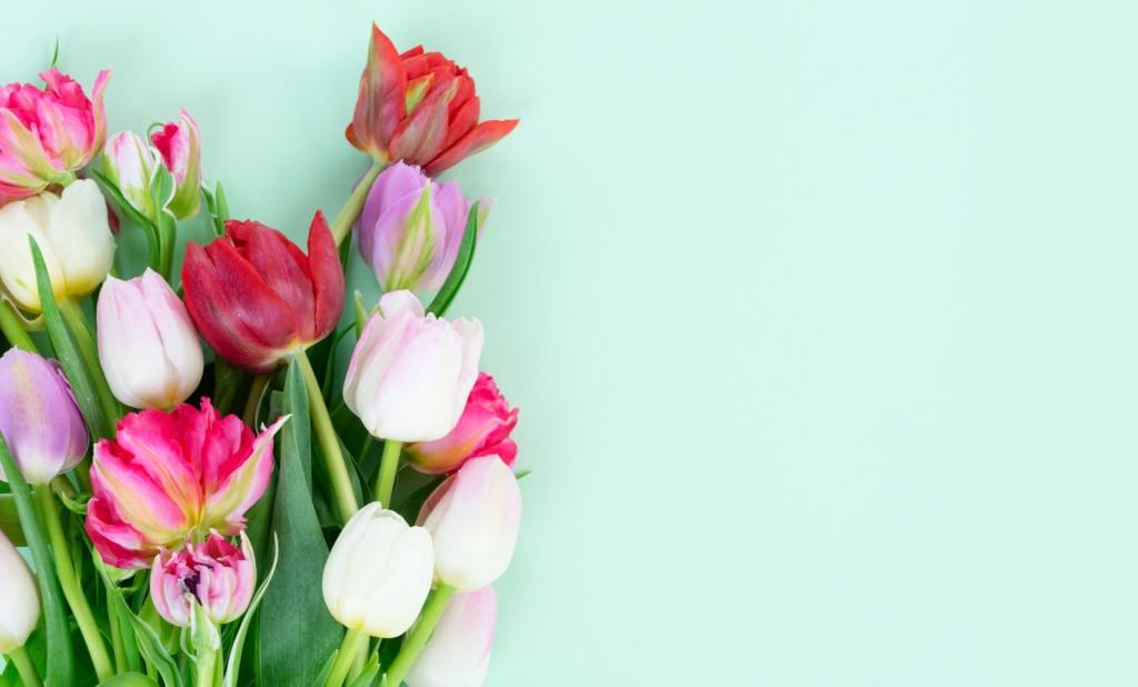 Ein Tulpenstrauß im Frühjahr ist ein Muss!