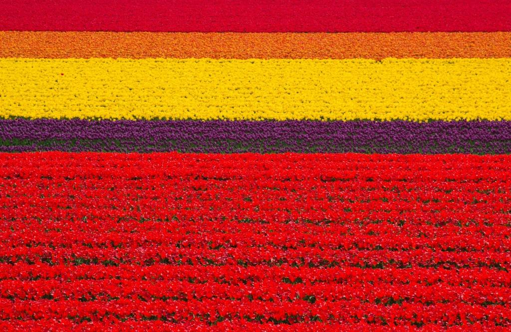 Holland im Frühjahr verzaubert.