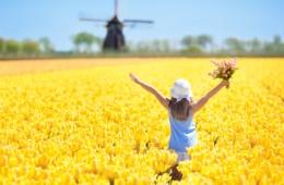 Holland ist berühmt für seine Tulpenbracht in den Frühjahrsmonaten.