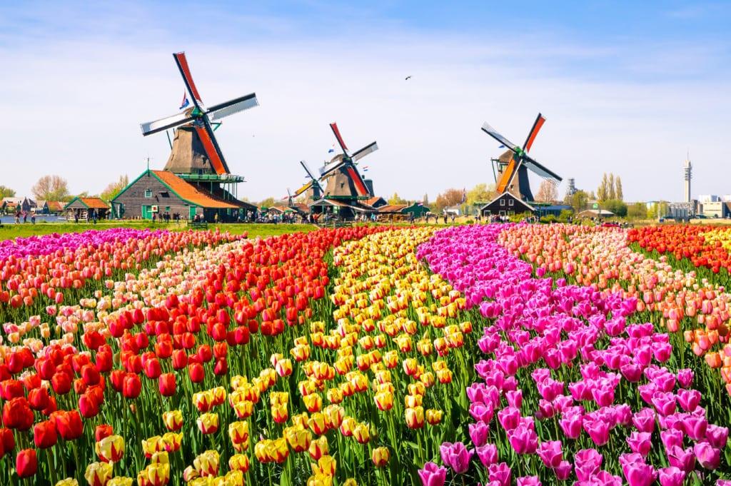 Der Keukenhof ist Hollands prächtigster Frühlingsgarten.