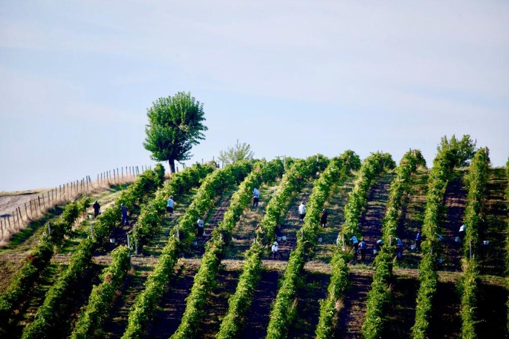 Weingut in Aserbeidschan