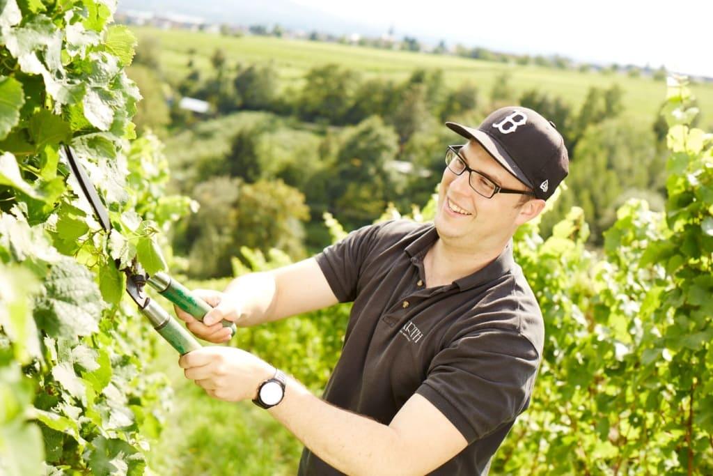 Winzer bei der Ernte der Weintrauben