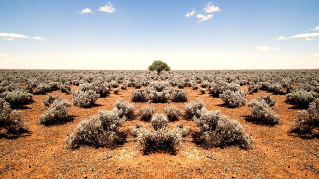 Busch in Australien
