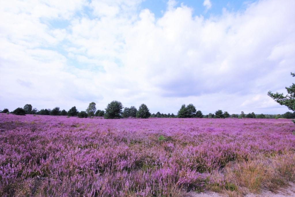 Kyritz-Ruppiner Heide in der Prignitz