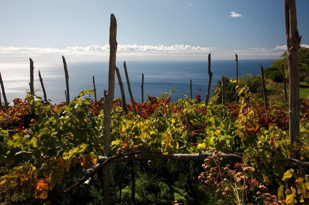 Weinberg bei Furore an der Amalfiküste