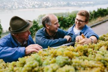 Winzer im Gespräch vor einem Behälter mit weißen Weintrauben
