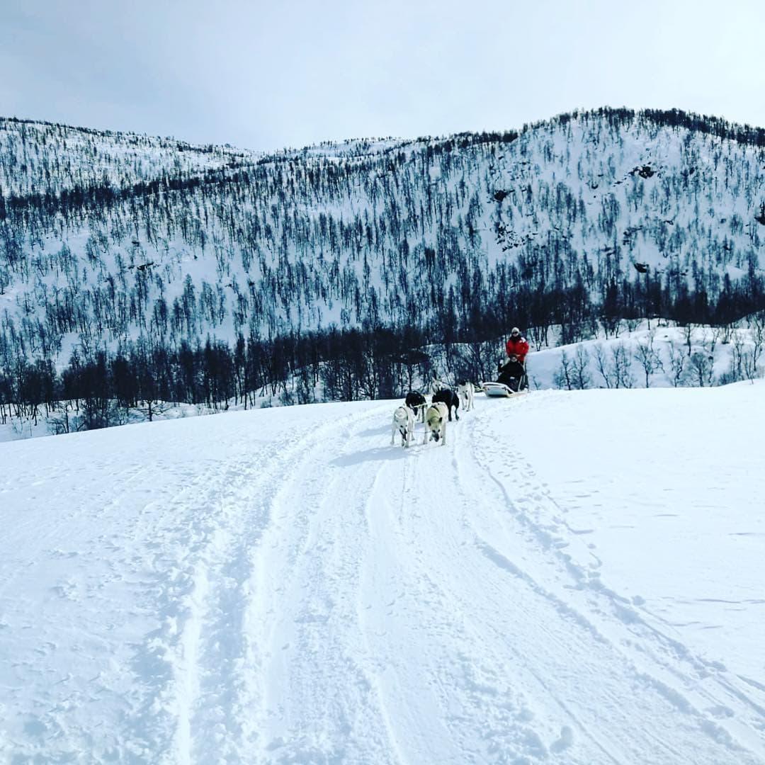 Redaktionsmitglied Madeline unterwegs durch #Norwegen. Natürlich auf dem #Hundeschlitten.  #reportervorort #schneelandschaften #instatravel #outside_project #passionpassport #norway