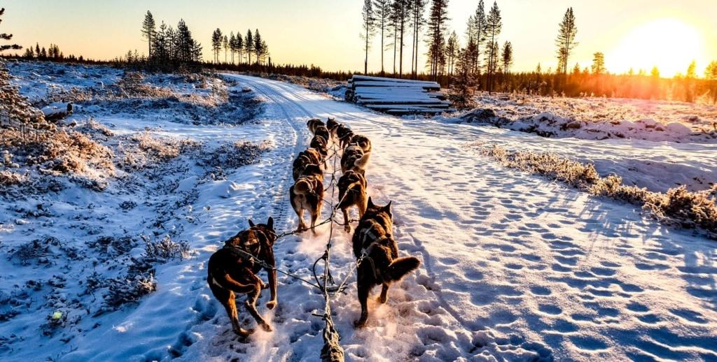 Huskys ziehen Schlitten durch Winterlandschaft