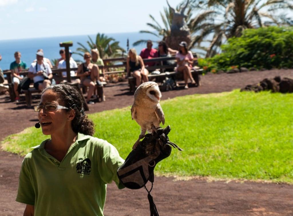Eulen-Vorführung im La Lajita Oasis Park