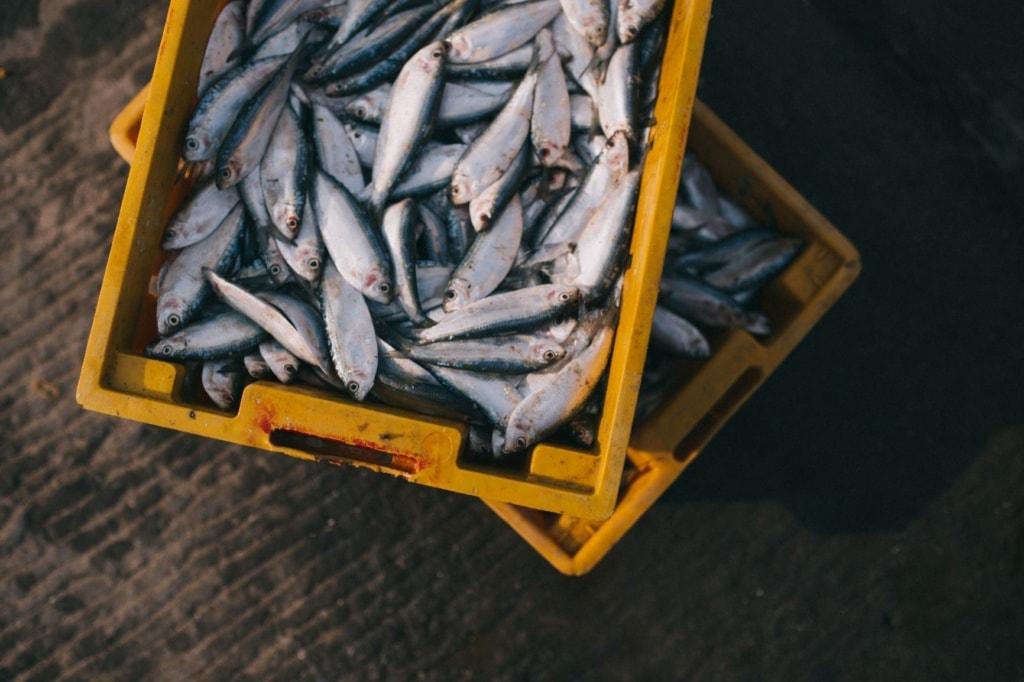 gelbe kisten mit fischen